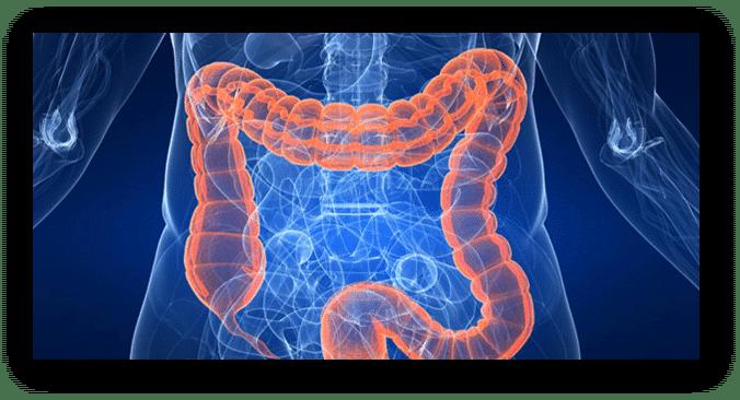 Chirurgia mininvasiva del colon-retto e dell'apparato digerente