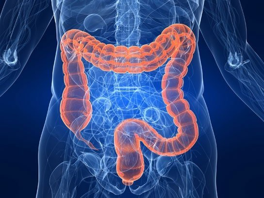 colon, intestino crasso